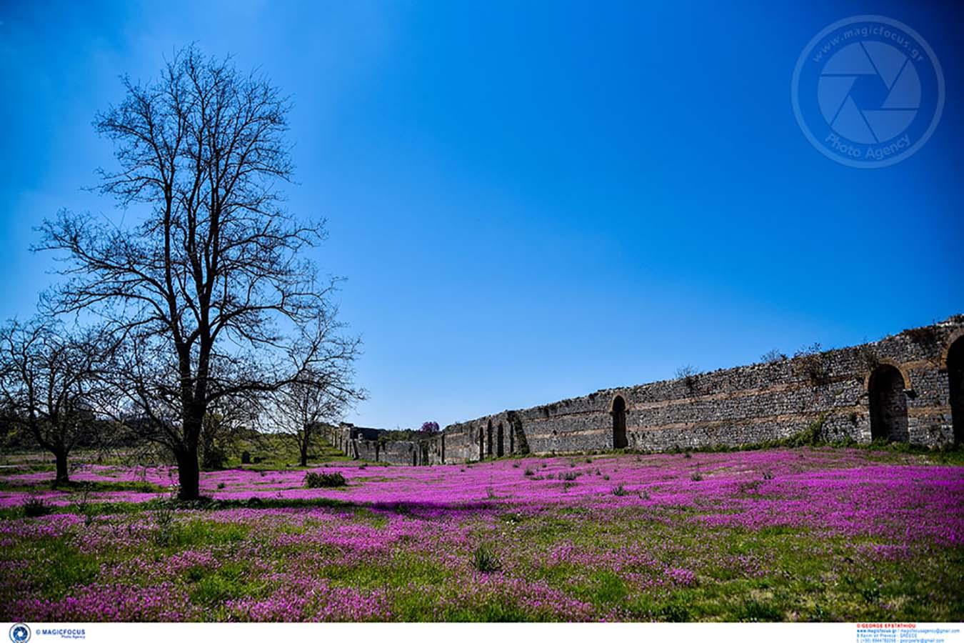 Πρέβεζα: Η Άνοιξη αγκαλιάζει τα τείχη της Αρχαίας Νικόπολης (φωτο)   Karvasaras - Ειδήσεις από την Δυτική Ελλάδα και όλο τον κόσμο